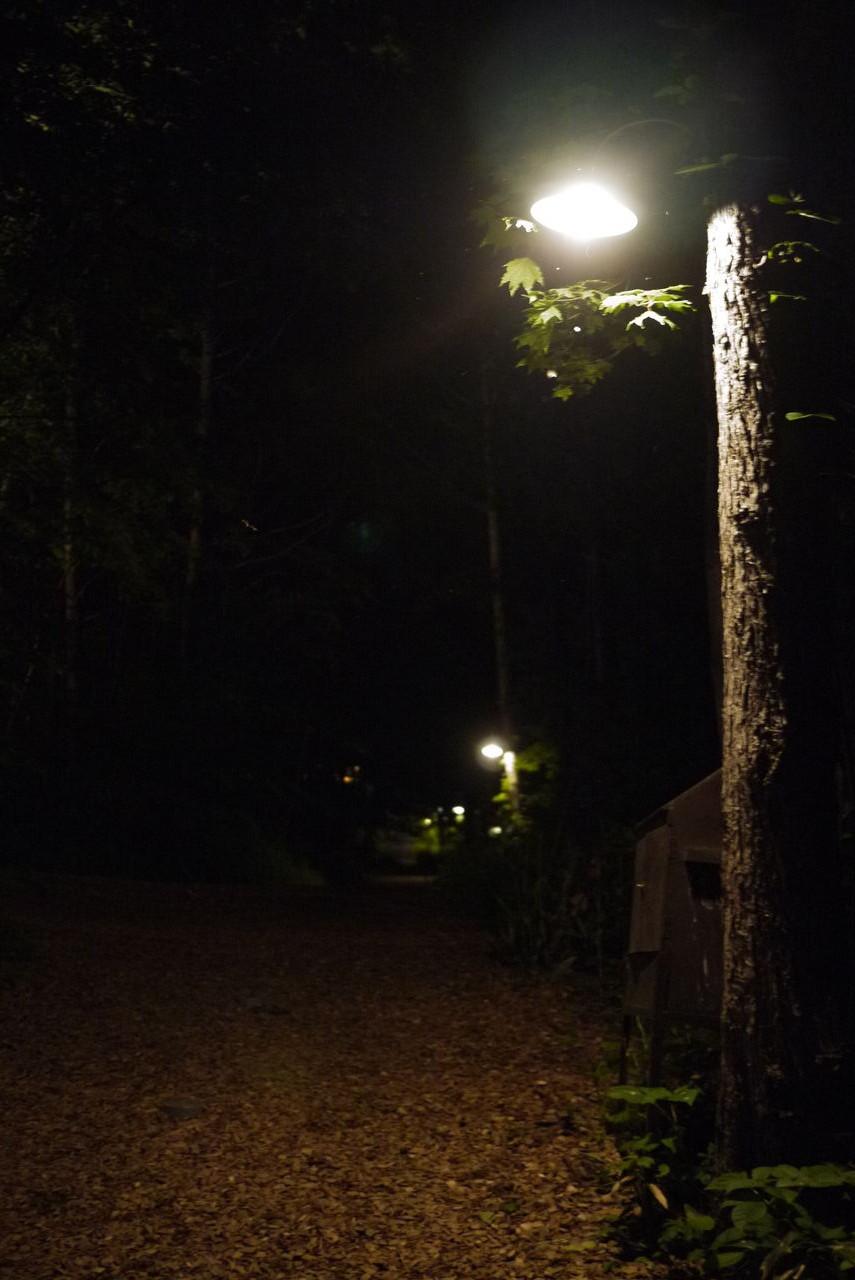 静かな森の中・・・