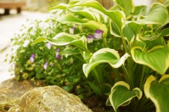 ギボウシも映えるテラス張りのお庭