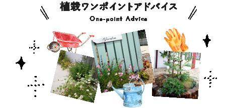 植栽ワンポイントアドバイス