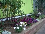 ケアタイムビル前の花壇