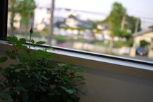 ミニバラと鹿嶋市城山の風景