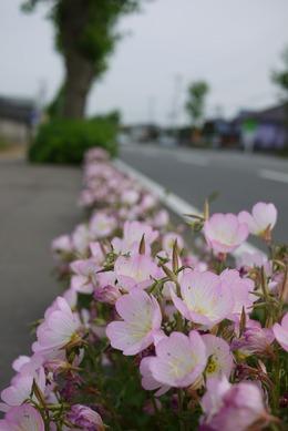 鹿嶋市城山の歩道の花