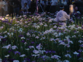 2010年6月12日あやめ園