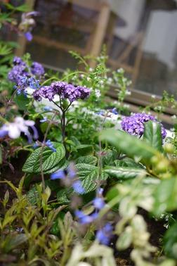 夏の花壇ガーデニング
