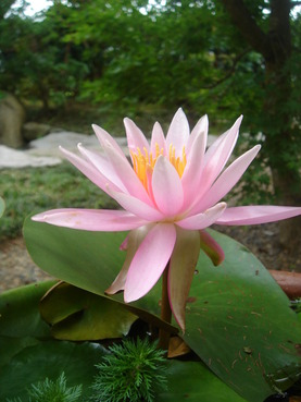 鹿嶋市エクステリアgroom蓮の花