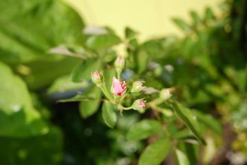鹿嶋市植栽工事groomコーネリア