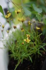 groom花壇