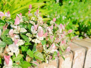 トゥールビヨン 花壇