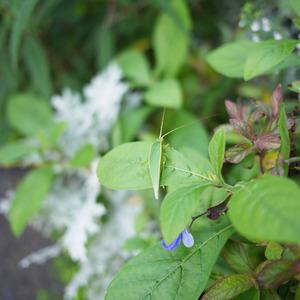 夏の終わりの花壇