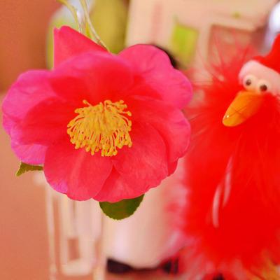 つばき 開花