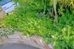 トゥールビヨン花壇