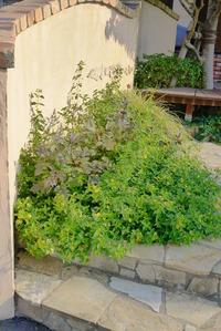 トゥールビヨ花壇