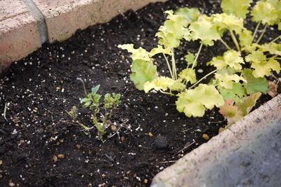 トゥールビヨンさん花壇