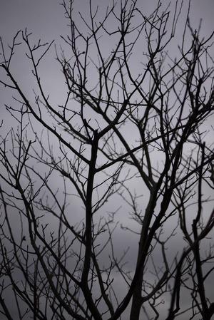 ジューンベリー 冬