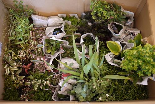 花壇用 苗