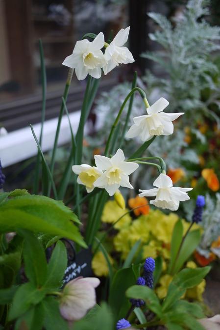 グルーム花壇