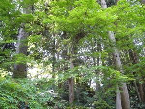 つくば牡丹園の森