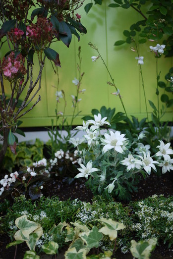 groom花壇 ホワイトガーデン