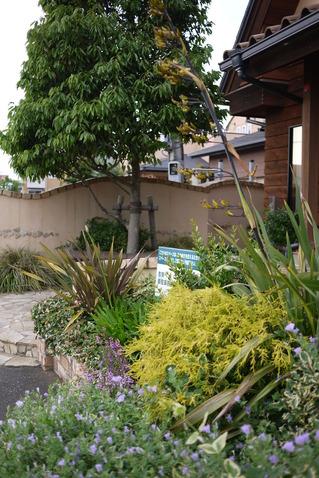トゥールビヨン様花壇
