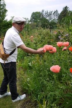オリエンタルポピーお花の大きさ