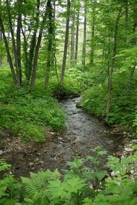 森の中を流れる川