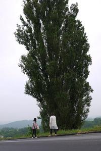 ンとメリーの木