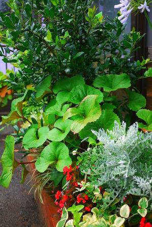 グルーム 夏花壇