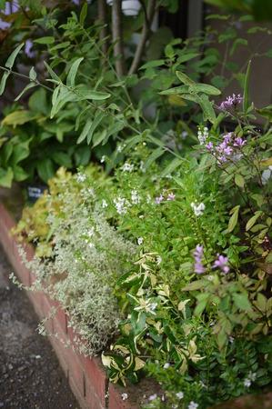 夏花壇の小花たち