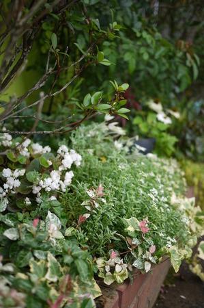 グルーム夏花壇