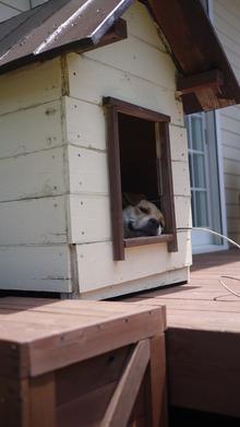 手作り 犬小屋