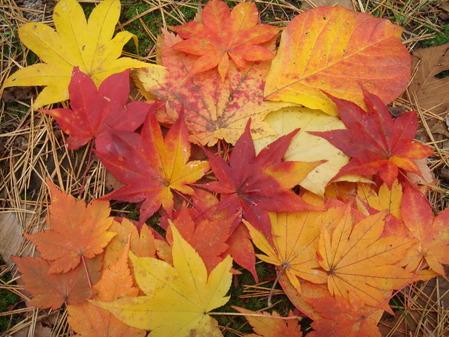 きれいな葉っぱを集めてみました♪