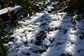うっすらと積もる雪♪