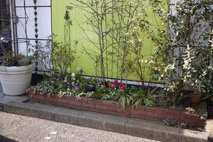 事務所の花壇