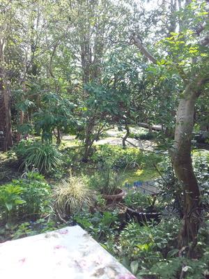 サザコーヒーお庭