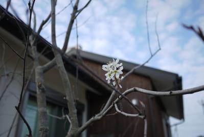 ジューンベリー開花☆