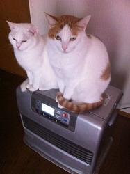 猫とファンヒーター