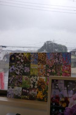 雨が降ってきました
