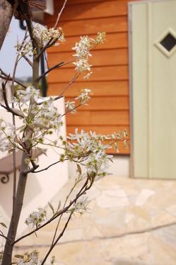 ジューンベリーのお花