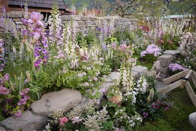 石垣に咲く花たち