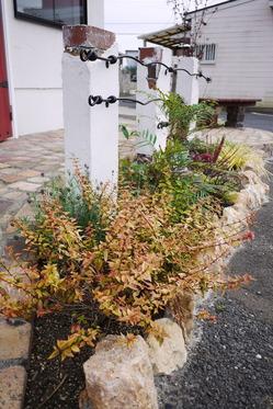 カラーリーフ花壇